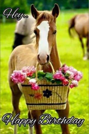 tarjetas de cumpleaños de caballos para whatsapp
