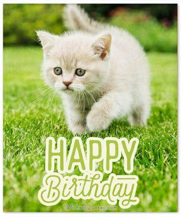 imagenes de cumpleaños con gatos graciosos