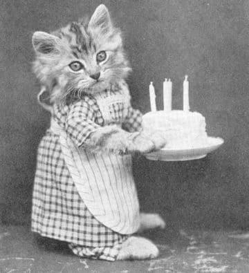 imagenes de cumpleaños con gatos originales