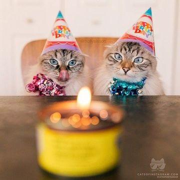 imagenes de cumpleaños con gatos tiernas