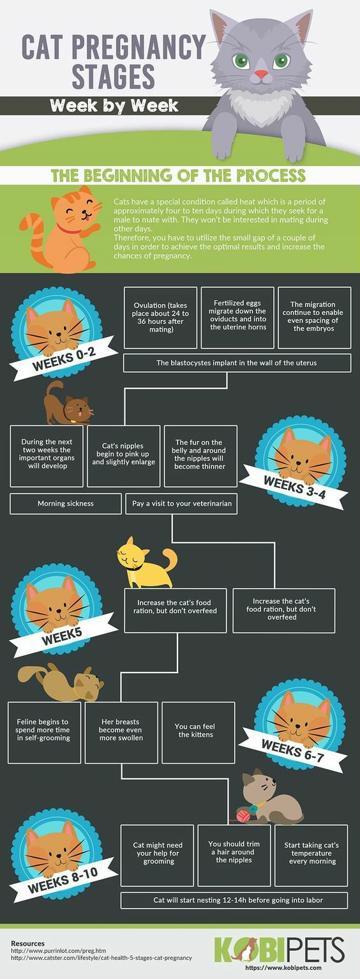 infografia de animales para niños con caracteristicas