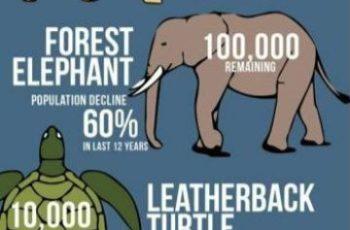 infografia de animales para niños cuidar