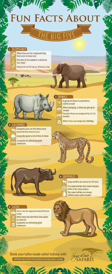 infografia de animales para niños de mamiferos