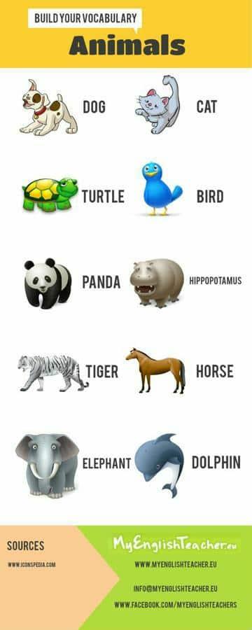 infografia de animales para niños de primaria