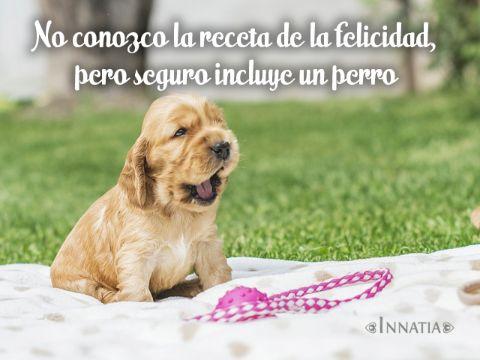 frases de amor para perros con fotos de cachorros