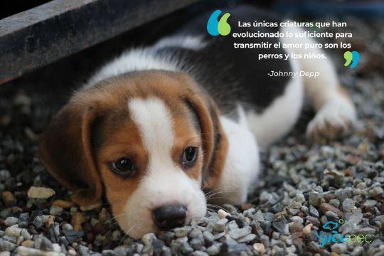 frases de amor para perros de personajes famosos