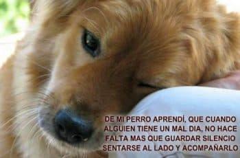 frases de amor para perros por su amistad