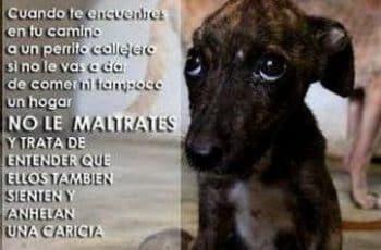 frases para perritos de la calle no al matrato animal (1)