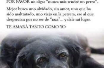 frases para perritos muertos carta