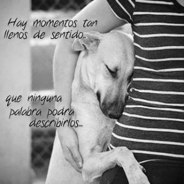 frases para tu perro que lo amas abrazo