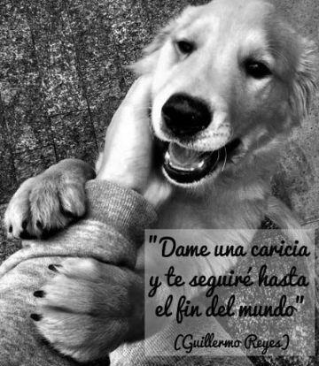 frases para tu perro que lo amas en pensamientos caninos