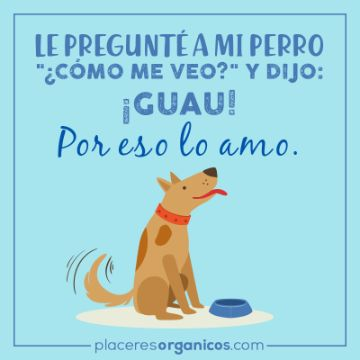 frases para tu perro que lo amas ocurrentes
