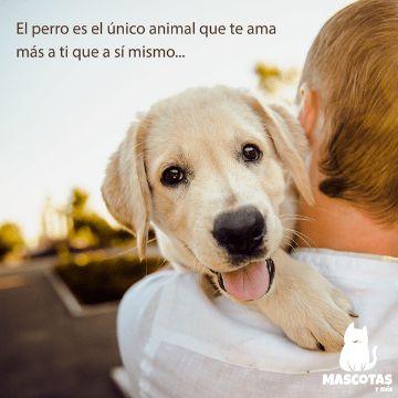 imagenes de perros con frases bonitas llenas de amor