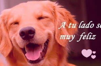 perritos con frases de amor curiosos rasgos