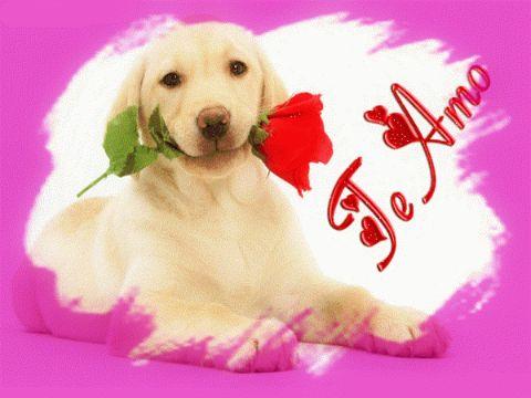 perritos con frases de amor para novia