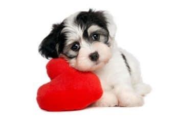 tarjetas de san valentin para amiga con fotos de cachorros