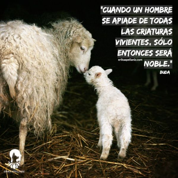 frases de respeto a los animales espirituales
