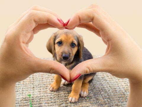 frases para mascotas amadas imagenes para editar