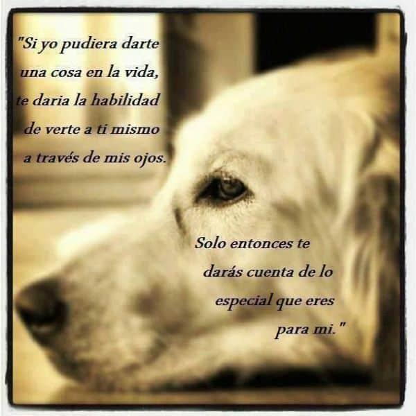 frases para un perro amigo pensamiento