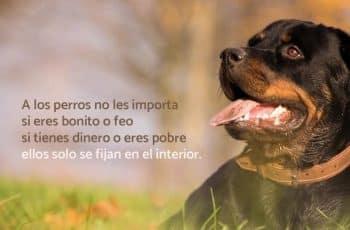 frases para un perro amigo razas