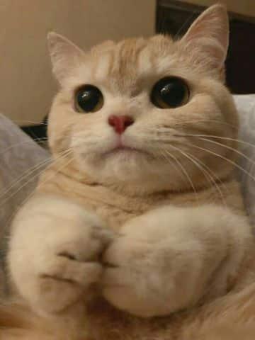 gatitos con frases de amor fotos para editar