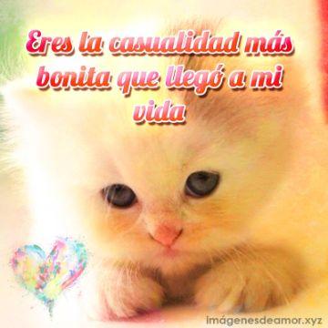 gatitos con frases de amor para enviar por mensaje