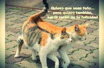 gatitos con frases de amor ternura